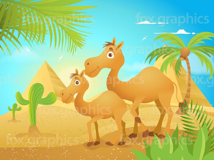 Vector camels illustration