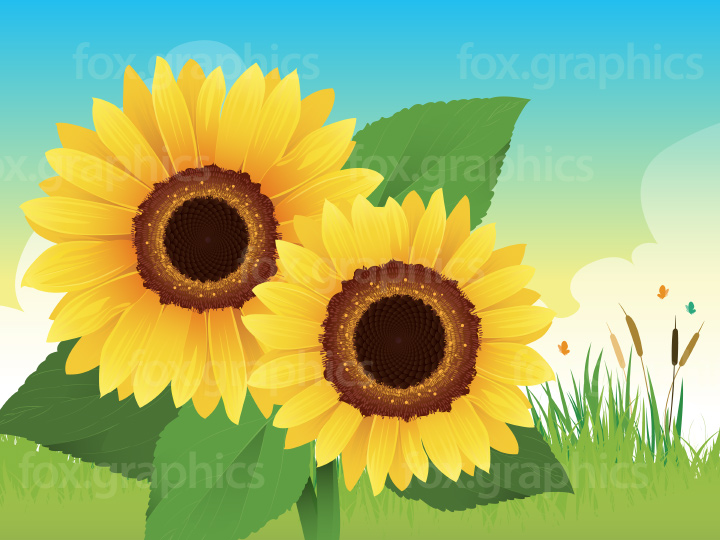 Sunflowers vector background