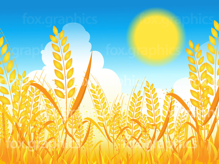 Vector wheat background