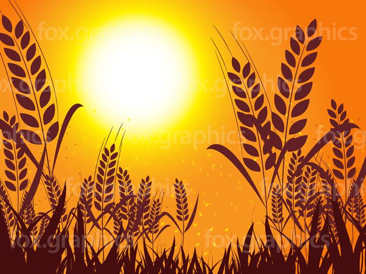 Vector wheat sunset